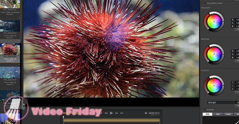 Video Friday: Bulletproof revolutionizing Media Management?
